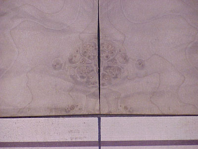 1511detail
