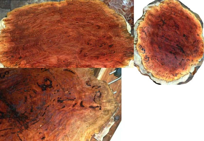 Salmon Gum Burl Australian Eucalyptus Burl
