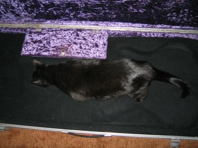 case cat